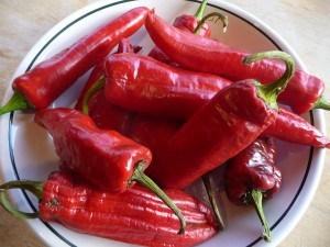 Italian heirloom chile cultivar Corno di Toro