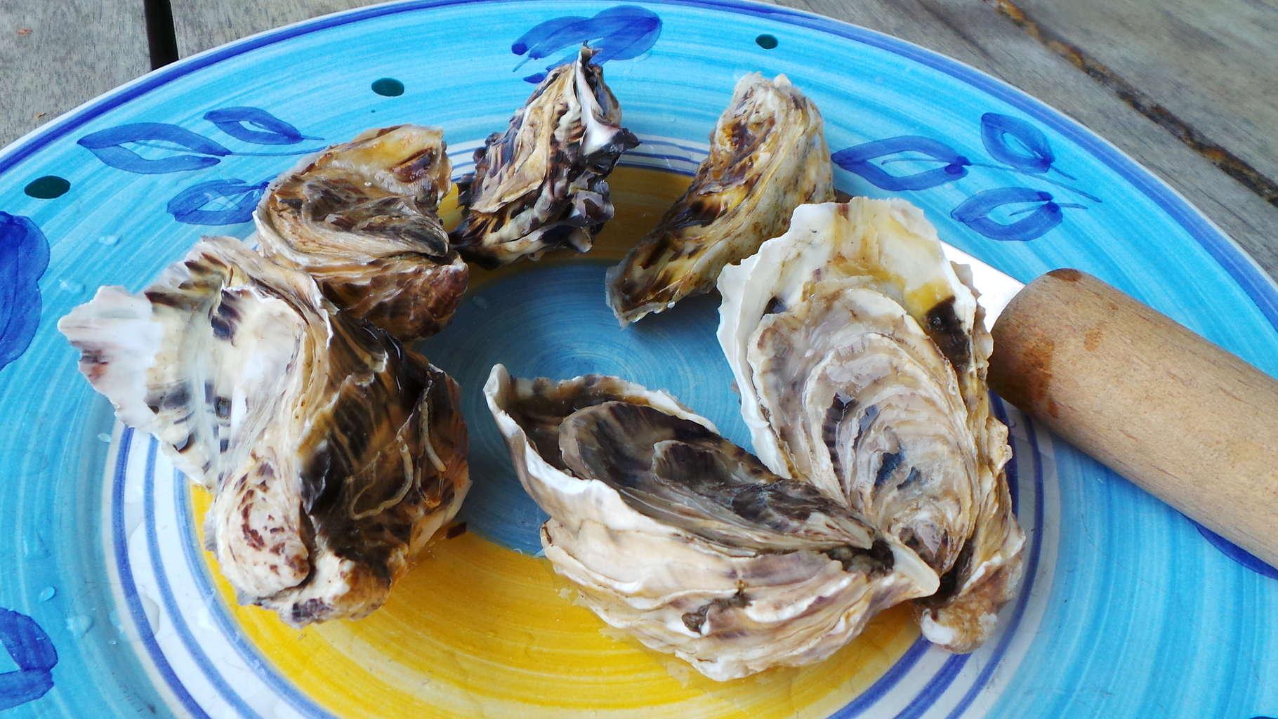 Oysters, Wellfleet (2)