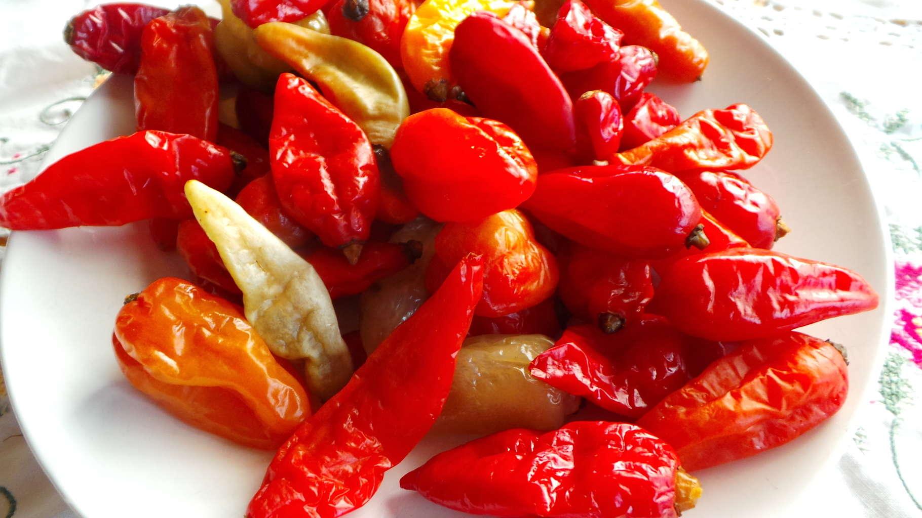 Chile, Aji puca-uchu (Capsicum baccatum var pendulum) (2)